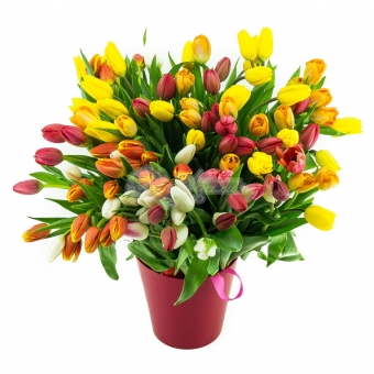 Букет из 155 Тюльпанов