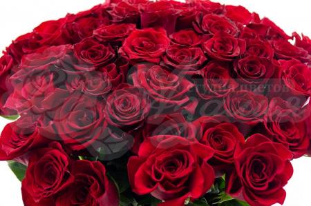 Букет из 75 Эквадорских роз
