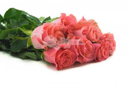 Высокая цветная роза поштучно